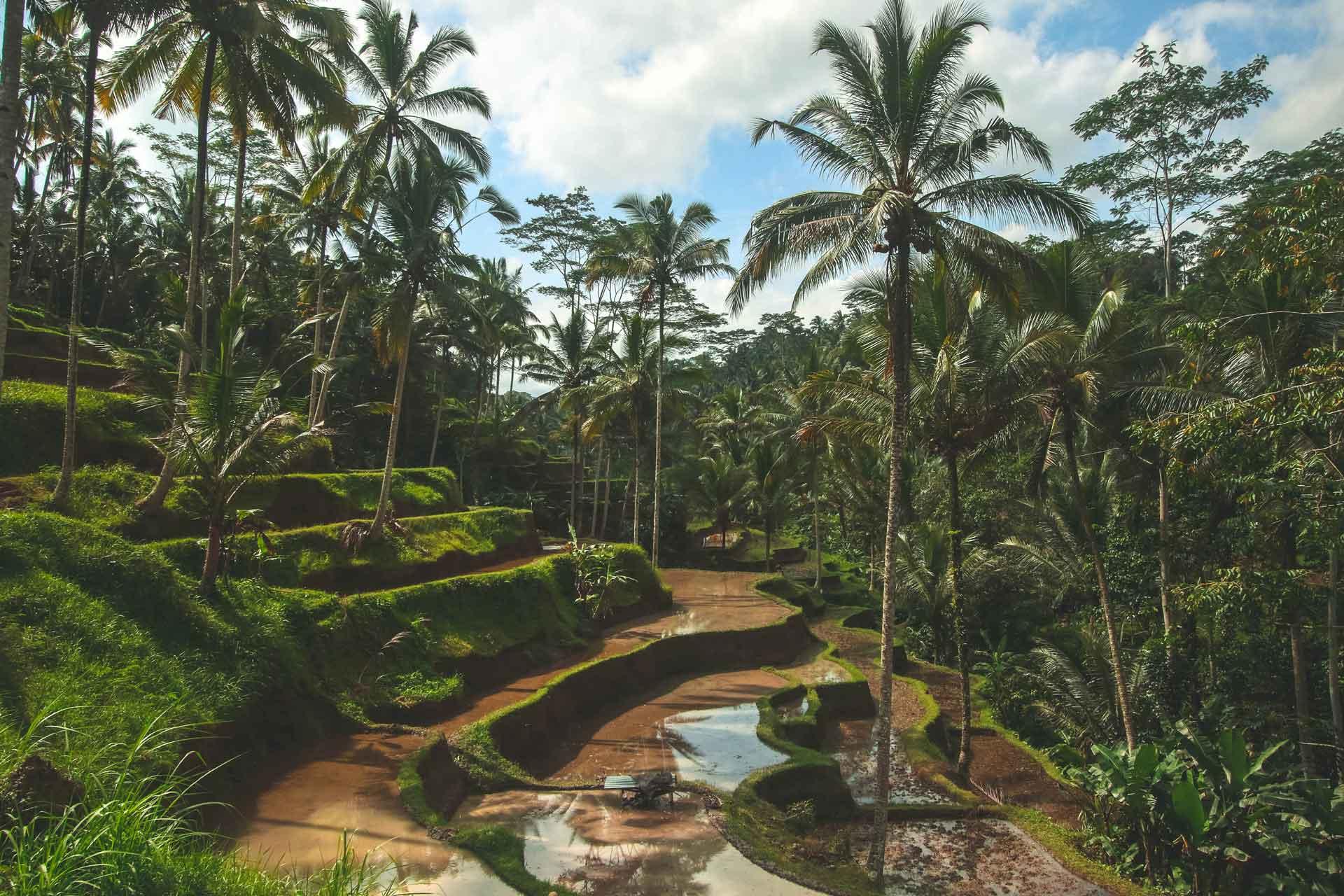Abzocke auf Bali – Vorsicht vor diesen Touristenfallen
